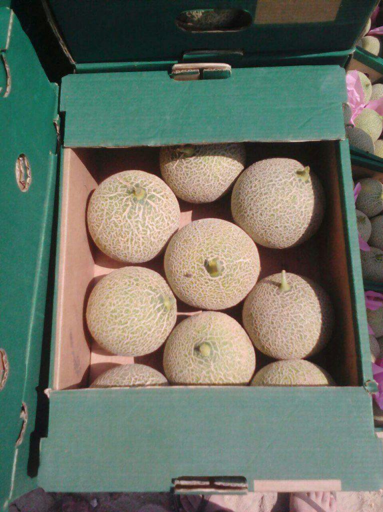 melon Eltayseer For Import & Export
